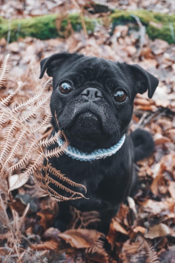 Hundechip Anmelden