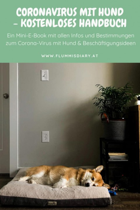 Coronavirus mit Hund – kostenloses E-Book
