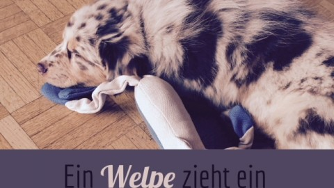 |Alltag| Ein Welpe zieht ein – Tipps für die ersten gemeinsamen Wochen