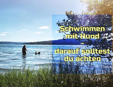 Schwimmen mit Hund – darauf solltest du achten