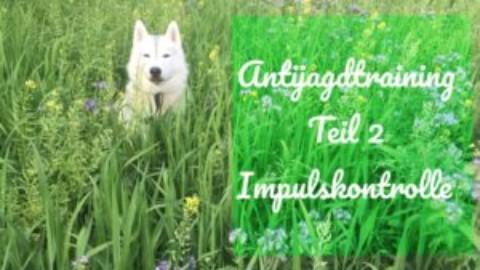 Antijagdtraining Teil 2 Impulskontrolle