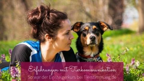 Erfahrungsbericht: Kurs in Tierkommunikation