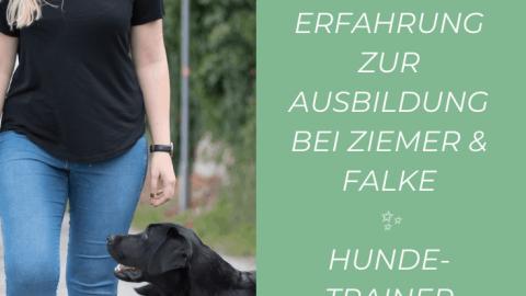 FAQ Hundetrainer Ausbildung bei Ziemer & Falke