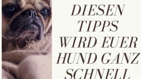 Erkältung beim Hund – die besten Hausmittel