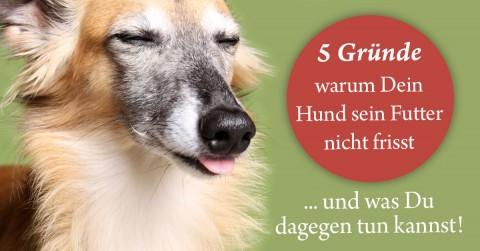 5 häufige Gründe, warum Dein Hund sein Futter nicht frisst – und was Du dagegen tun kannst