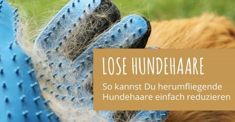 Mein Tipp zum Fellwechsel: Lose Hundehaare einfach reduzieren