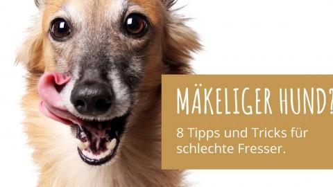 Mäkeliger Hund? 8 einfache Tipps und Tricks für schlechte Fresser