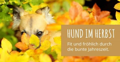 Fit und fröhlich durch die bunte Jahreszeit: Hund im Herbst