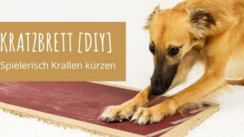 Kratzbrett [DIY]: Spielerisch leicht Krallen kürzen