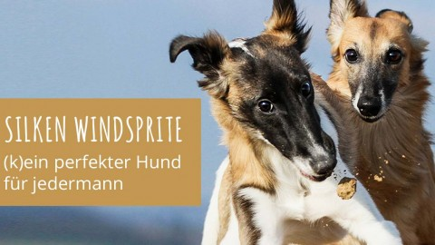 ilken Windsprite, (k)ein perfekter Hund für jedermann?