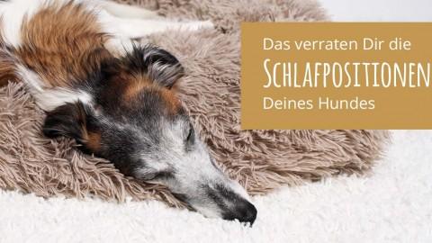 Die Schlafpositionen Deines Hundes und was sie Dir verraten