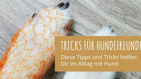 5 Tipps und Tricks für Hundefreunde