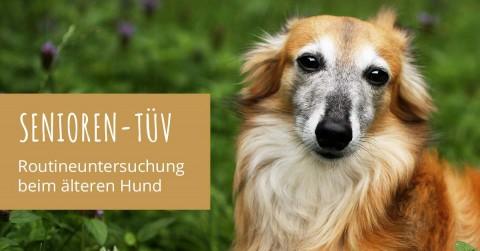 Vorsorgeuntersuchung beim älteren Hund: Merlin beim Senioren Check-Up