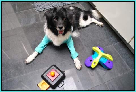Mental & Physical Health in Dogs: about Dog Toys and making Dog Food