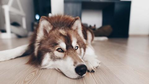 Fellpflege beim Hund: 9 Tipps für glänzendes und schönes Fell!