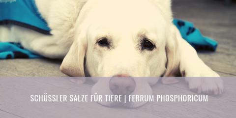 Schüssler Salze für Tiere | Ferrum Phosphoricum