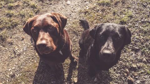Warum die Hundetagesstätte Flummi nicht wollte – Hundetagesstätte ein Erfahrungsbericht