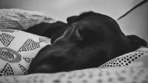 Flummi im Winterschlaf