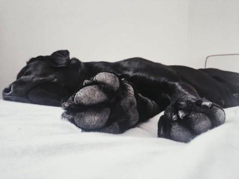 DIY Pfotenbalsam – Samtweiche Pfoten für euren Hund zum selber machen