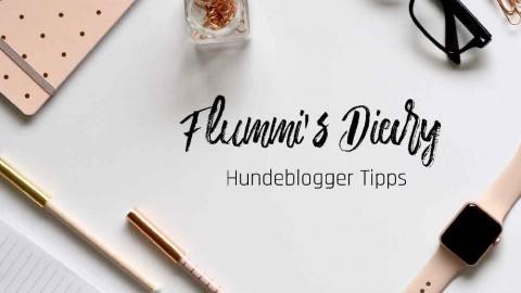Hundeblogger werden – die 22 besten Tipps für den Start
