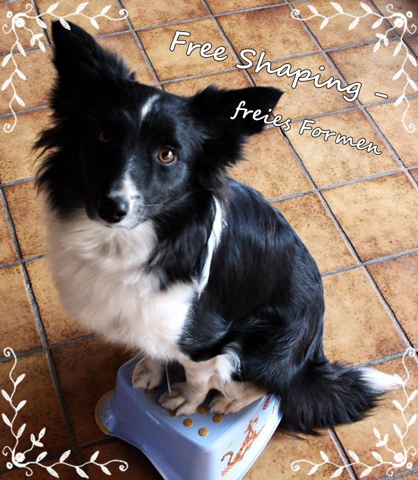 free shaping Hund