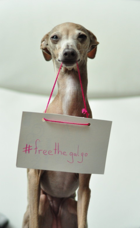 #freethegalgo