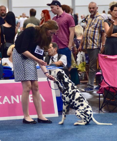 Das größte Hunde-Event Deutschlands