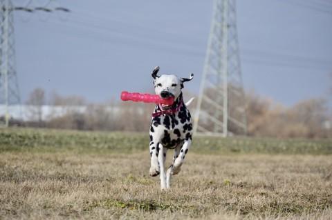 Was wir von unseren Hunden lernen können