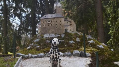 in Tschechien sagt man Dalmatin…