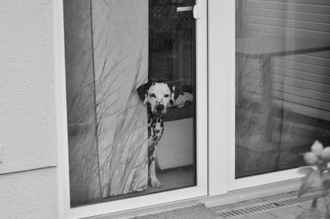 Wenn die Tür zu geht…