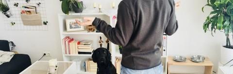 Fragen eines Hundeneulings