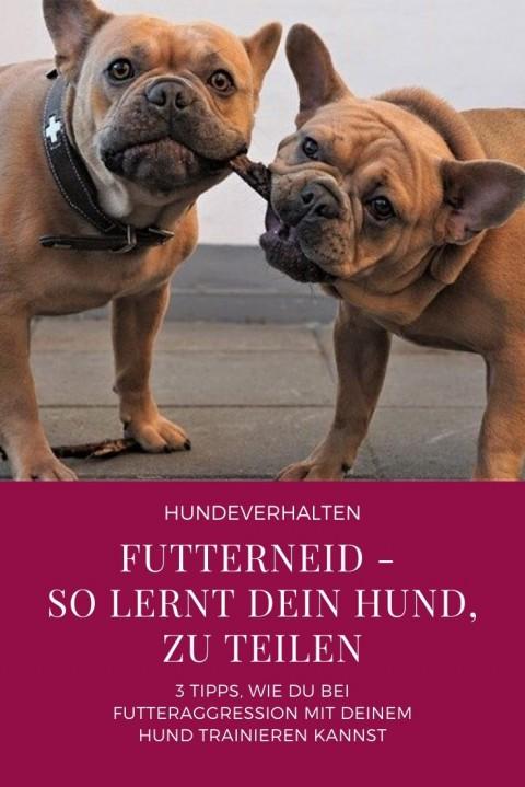 Futterneid – So lernt dein Hund zu teilen