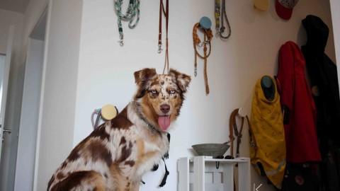 |kreativ| Eine kunterbunte Garderobe für den Hund