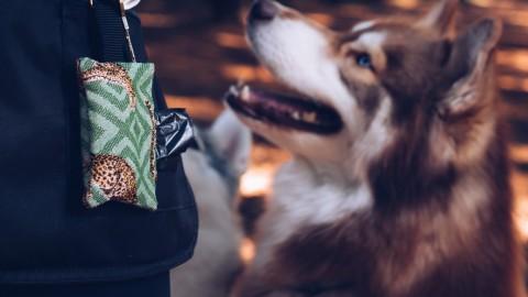 Hunde-DIY: Kotbeutelspender für den Schlüsselanhänger selber machen!