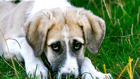 Gastritis beim Hund – Ursachen & Tipps für die Ernährung