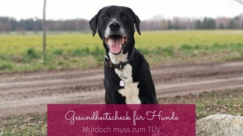 Murdoch muss zum TÜV – Gesundheitscheck für Hunde