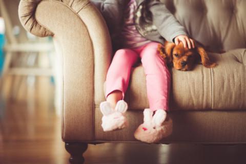 9 Beschäftigungen mit dem Hund in Haus und Wohnung