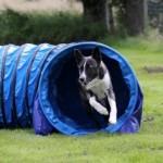 Gruppenlogo von Hundesport