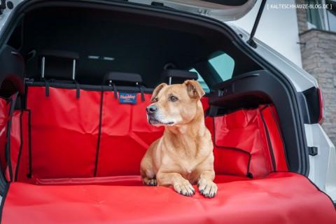 Getestet im Seat Ateca: Der Kofferraumschutz für Hunde von The Hatchbag Company