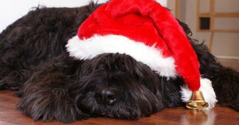 Advent, Advent: ein Weihnachtsgewinnspiel