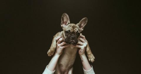 8 ehrliche Gründe, warum das Hundehalter Dasein nicht immer Spaß macht