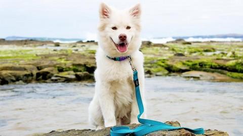 Warum dem Hund bleib beibringen cooler ist als es sich anhört!