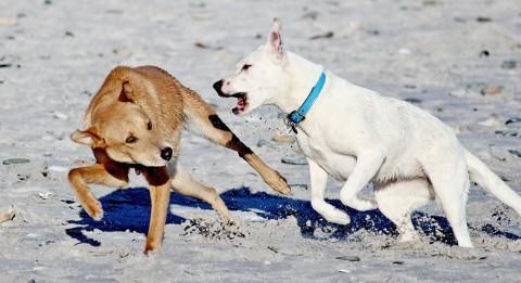 Hunde machen das unter sich aus: ein großer Irrtum!!