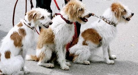 Warum Hundebegegnungen an der Leine tabu sind