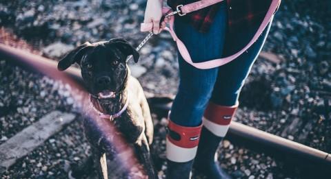 Hundehalter untereinander: seid netter zueinander!