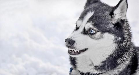 Welche Konfliktstrategie nutzt Dein Hund?