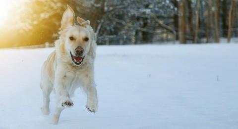 Winterurlaub mit Hund: Skifahren und Wandern in Sölden