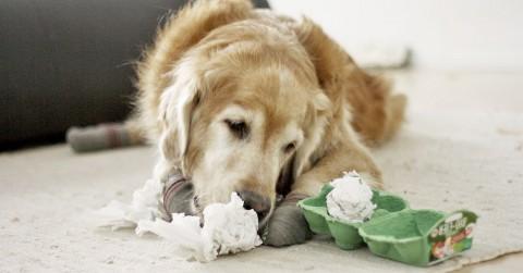 DIY Hunde Spiel: gefülltes Papier-Eier im Eierkarton