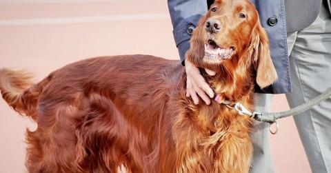 Ist Belohnung in der Hundeerziehung Bestechung?