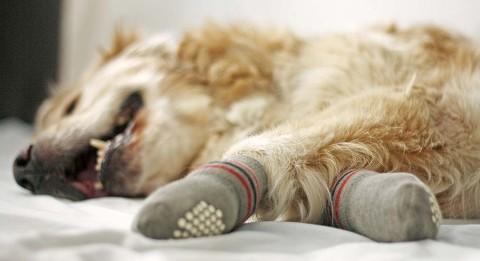 Anti Rutsch Socken für den Hund
